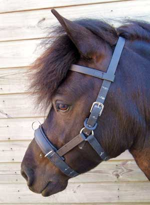 Equine Pony Tack Specialist selling Tack and Show Equipment